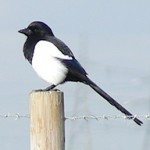 Twitter Keeps Flying But Magpie Makes The Money